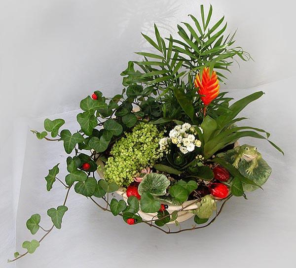 Фото композиция из комнатных цветов