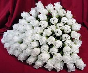 цветы фото белые розы букеты