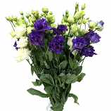 Букет из белой и фиолетовой эустомы